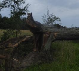 Informacja o sposobie postępowania w sprawie drzew, które stanowią złomy lub wywroty.