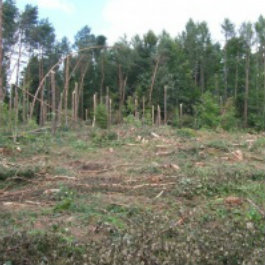Komunikat dla rolników i właścicieli lasów prywatnych - termin 31.10.2017r.