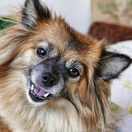 Harmonogram obowiązkowych szczepień psów