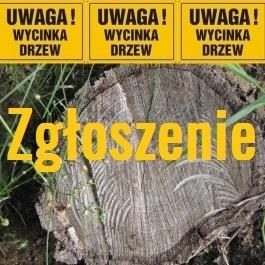 Obowiązek zgłoszenia wycinki drzew na gruntach prywatnych